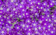 Purple Flowers Available In December 16 Background Wallpaper