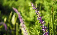Purple Flowers Available In December 4 Hd Wallpaper