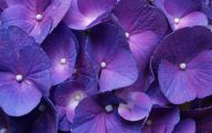 Purple Flowers Available In October 23 Background