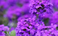 Purple Flowers Blog 5 Desktop Wallpaper