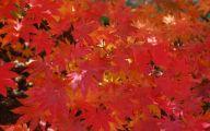 Purple Flowers Bloom In Fall 15 Background Wallpaper