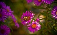 Purple Flowers Bloom In Fall 19 Free Wallpaper