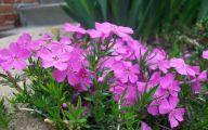 Purple Flowers Bloom In Fall 2 Free Wallpaper