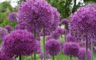 Purple Flowers Bloom In Fall 21 Background Wallpaper