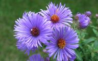 Purple Flowers Bloom In Fall 23 Desktop Wallpaper