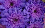 Purple Flowers Bloom In Fall 28 Free Hd Wallpaper