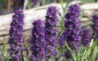 Purple Flowers Bloom In Fall 3 Cool Wallpaper