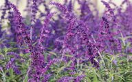 Purple Flowers Bloom In Fall 34 Cool Wallpaper