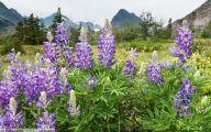 Purple Flowers Bloom In Fall 4 Background