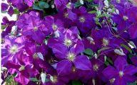 Purple Flowers Bouquet 5 Background Wallpaper