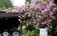 Purple Flowers Brazil 14 Free Hd Wallpaper