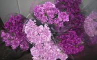 Purple Flowers Bulk 29 Wide Wallpaper
