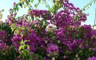 Purple Flowers Bush 1 Background Wallpaper