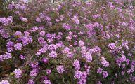 Purple Flowers Bush 14 Cool Wallpaper
