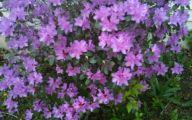 Purple Flowers Bush 15 Background