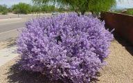Purple Flowers Bush 16 Hd Wallpaper