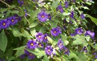 Purple Flowers Bush 17 Free Hd Wallpaper