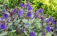 Purple Flowers Bush 18 Background Wallpaper