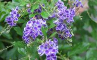 Purple Flowers Bush 2 Cool Wallpaper