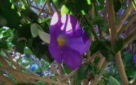 Purple Flowers Bush 22 Hd Wallpaper