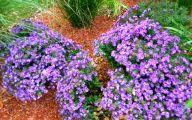 Purple Flowers Bush 25 Hd Wallpaper