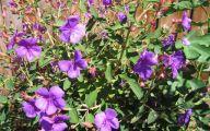 Purple Flowers Bush 26 Free Hd Wallpaper
