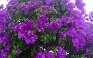 Purple Flowers Bush 28 Widescreen Wallpaper