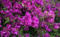 Purple Flowers Bush 3 Cool Wallpaper