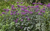 Purple Flowers Bush 4 Cool Wallpaper