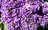 Purple Flowers Bush 6 Cool Wallpaper