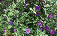 Purple Flowers Bush 8 Hd Wallpaper