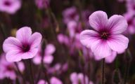 Purple Flowers Images 5 Cool Hd Wallpaper
