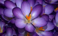 Purple Flowers Lyrics 32 Hd Wallpaper