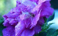 Purple Flowers Lyrics 33 High Resolution Wallpaper