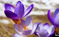 Purple Flowers Lyrics 9 Background