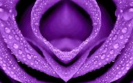 Purple Flowers Meaning 15 Widescreen Wallpaper