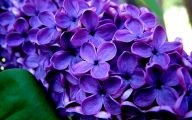 Purple Flowers Meaning 18 High Resolution Wallpaper