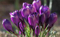 Purple Flowers Meaning 19 Hd Wallpaper