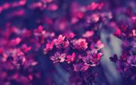 Purple Flowers Meaning 30 Background Wallpaper