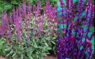 Purple Flowers Names 4 Hd Wallpaper