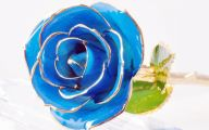 Real Black Roses For Sale 27 Desktop Background