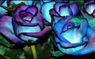 Real Black Roses For Sale 4 Widescreen Wallpaper