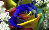 Real Black Roses For Sale 9 Widescreen Wallpaper