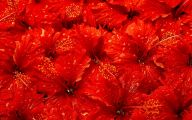 Red Flowers Are Red 2 Cool Hd Wallpaper