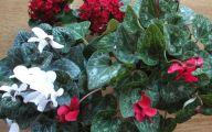 Red Flowers Around Christmas 36 Hd Wallpaper