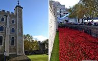 Red Flowers Around Tower Of London 14 Cool Wallpaper