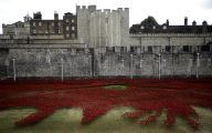 Red Flowers Around Tower Of London 25 Free Wallpaper