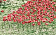 Red Flowers Around Tower Of London 26 High Resolution Wallpaper