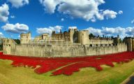 Red Flowers Around Tower Of London 31 Cool Wallpaper