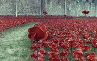 Red Flowers Around Tower Of London 33 Free Hd Wallpaper